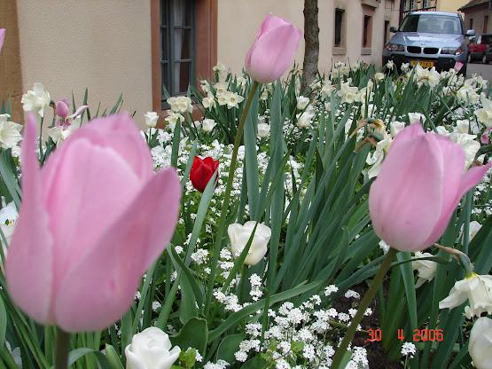 Idzie wiosna:)