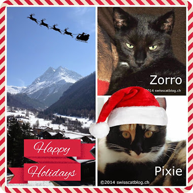 Swiss Cat Blog