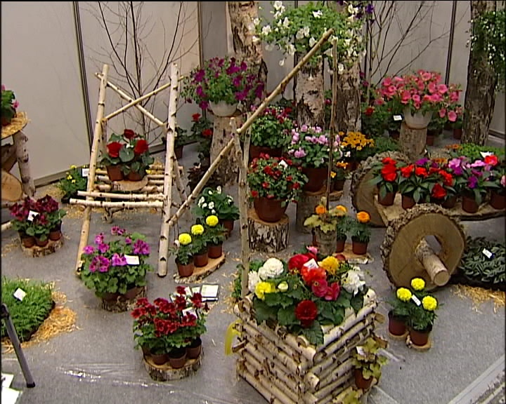 Выращивание уличных растений в горшках 84