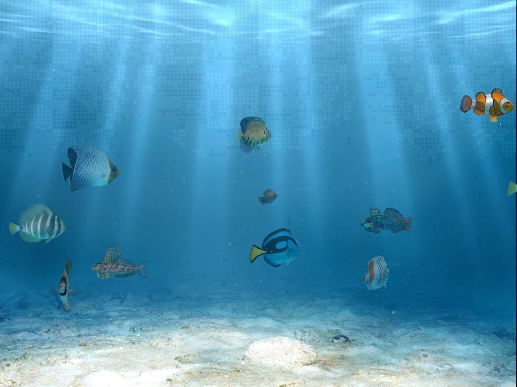Un mundo de sensaciones im genes del fondo del mar - Fotos fondo del mar ...