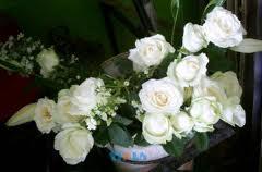 Budidaya, Mawar, Holland, Budidaya mawar holland, Mawar merah, Mawar putih