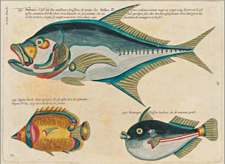 illustration fish