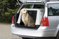 Hunde Transport im Auto