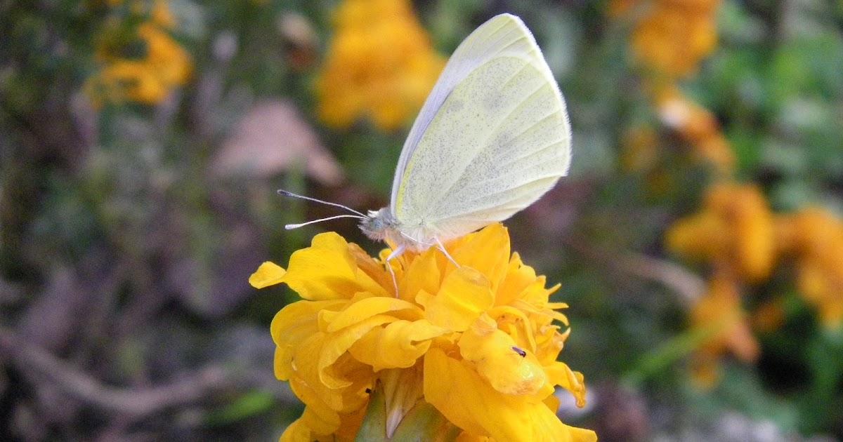 Le farfalle di elisa cora for Cora 11 novembre