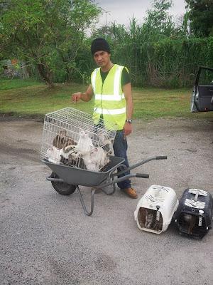 Sepuluh Ekor Kucing Disyaki Dibuang Di Bawah Jambatan