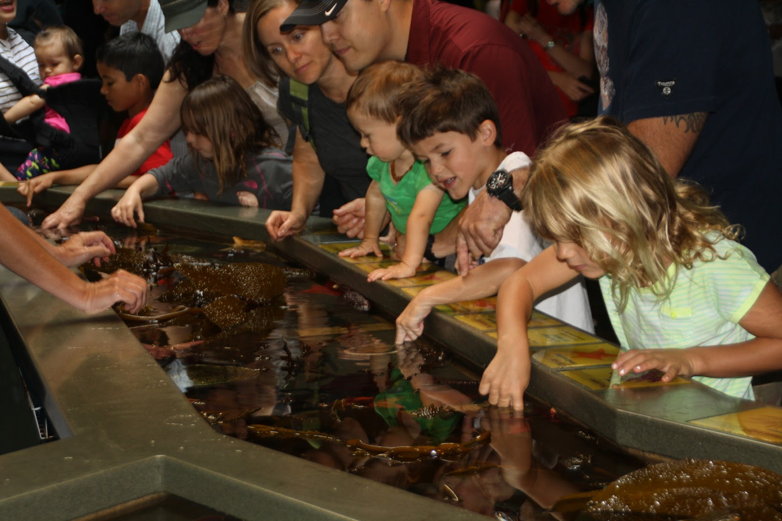 Monterey Bay Aquarium Macaroni Kid
