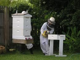 Honey bee gardens