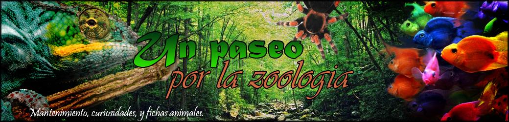 Un paseo por la zoología