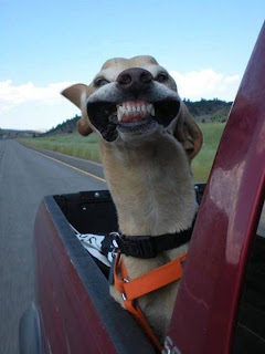 Excited Dog in Car