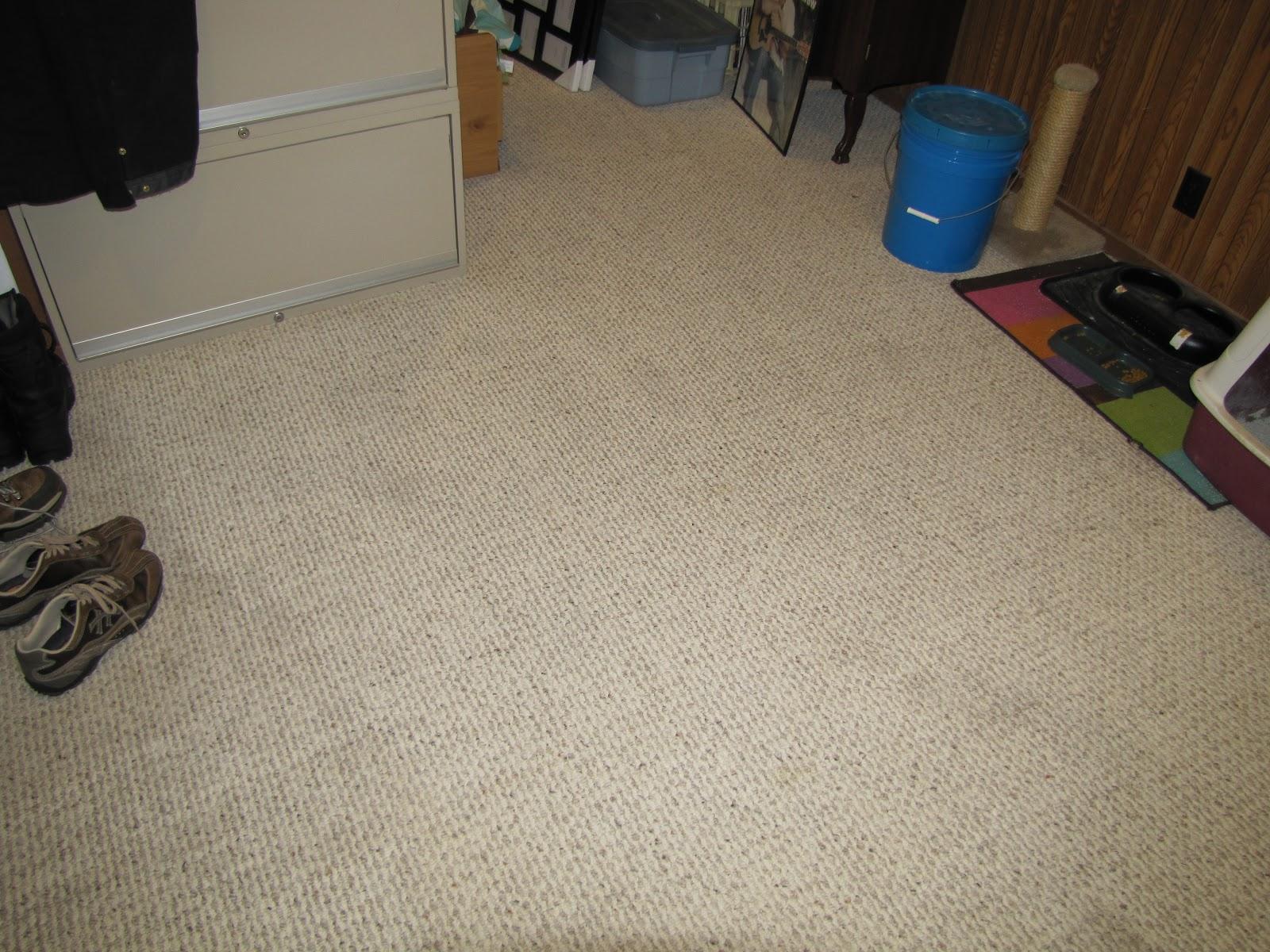 Genesis 950 Pet Stain Remover: Genesis 950 Carpet Cleaning