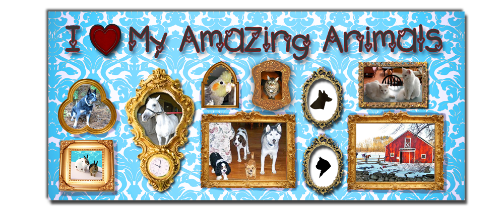 I Love My Amazing Animals