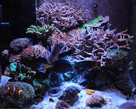 Marine Aquarium Rock Which Rock Is Right For You Marine Depot Blog