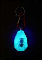 Gran Avispa. Hymenoptera Disecada, Fluorescente