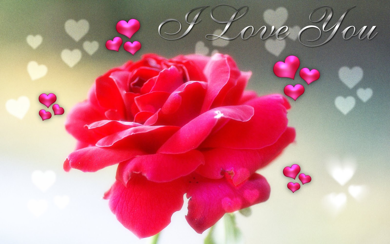 Beautiful Rose for I Love You Wallpaper