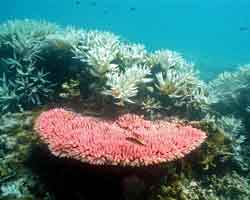 Propriedades das algas marinhas