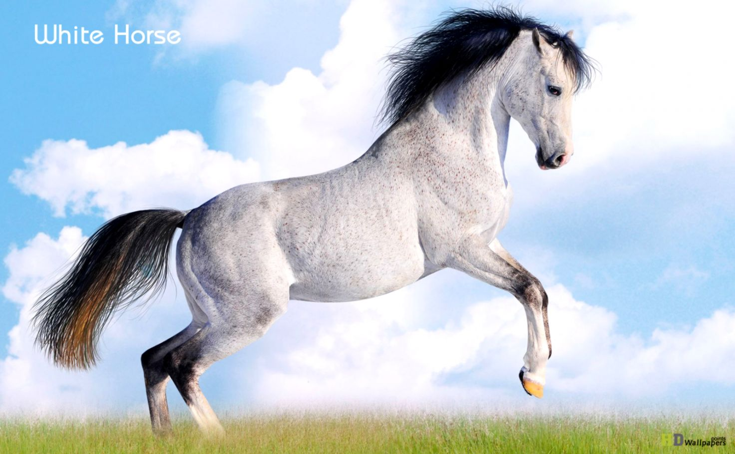 Download   Wallpaper Horse Beauty - horse-archives-wallpapers-points  Perfect Image Reference_425910.jpg