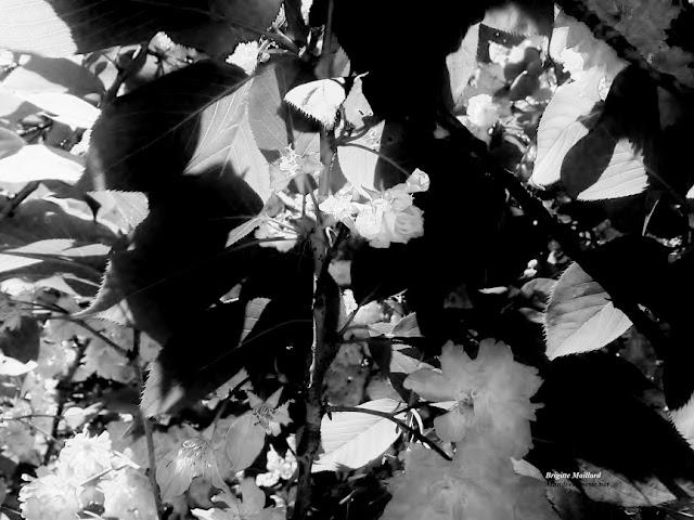 Monde en poésie L'espace d'un feuillage