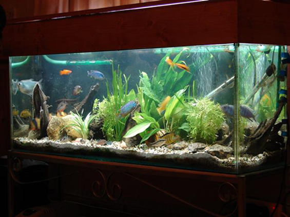 betta fish awareness day betta fish care the betta fish tank debate. Black Bedroom Furniture Sets. Home Design Ideas
