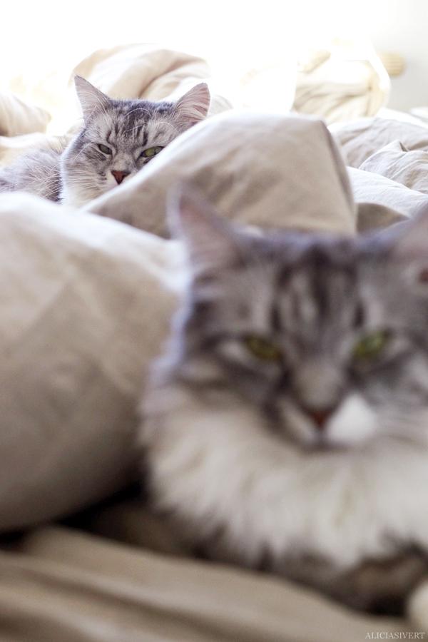 aliciasivert, alicia sivert, alicia sivertsson, katt, cat, katten tofslan och katten vifslan