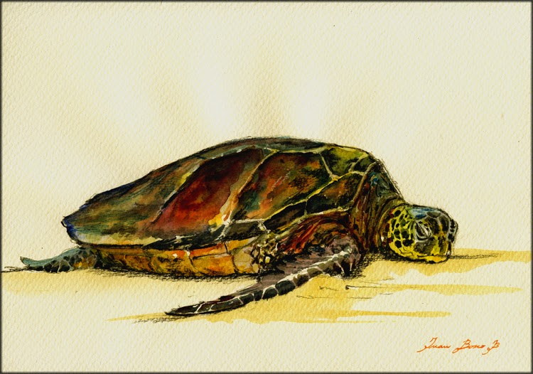 San martin arts crafts sea turtles for Turtle arts and crafts