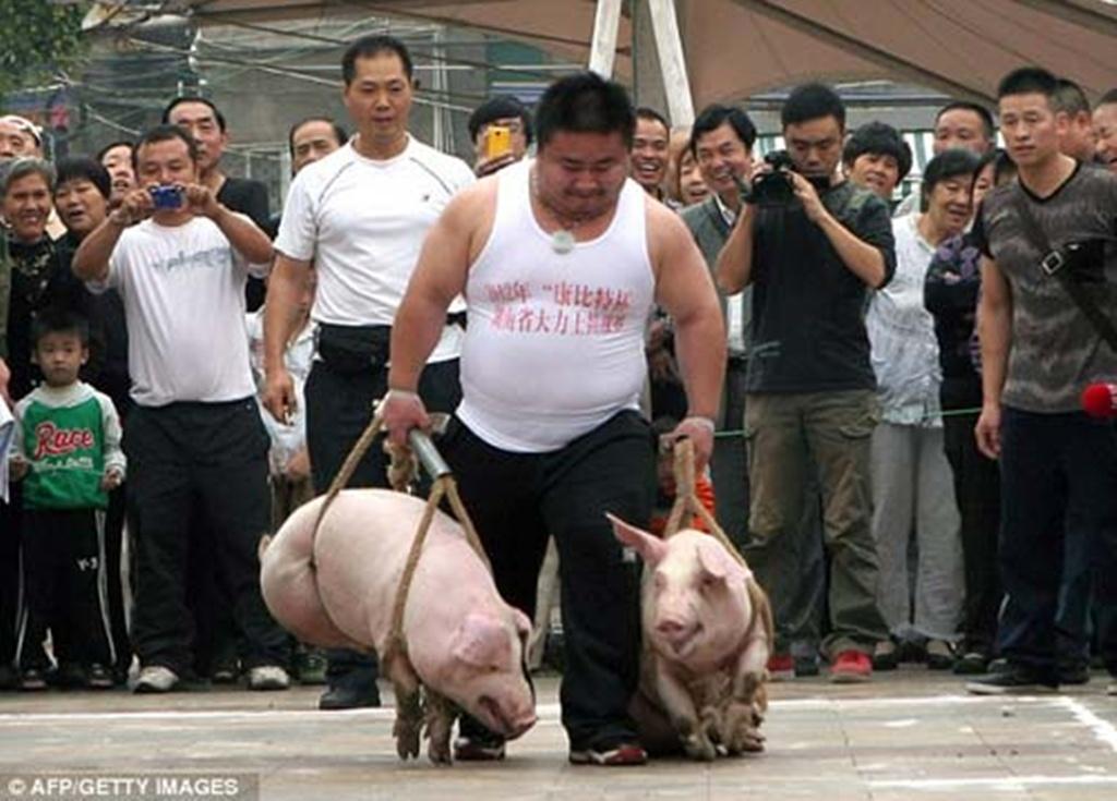 Cuộc thi xách lợn, Trung Quốc