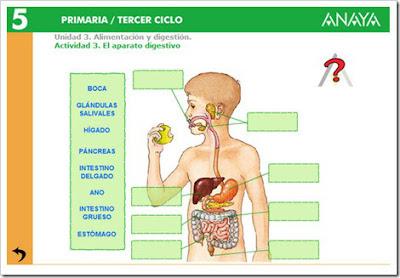 http://www.ceipjuanherreraalcausa.es/Recursosdidacticos/QUINTO/datos/02_Cmedio/datos/05rdi/ud03/03.htm