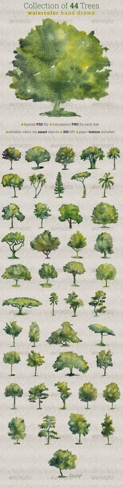 Various trees painted in watercolour