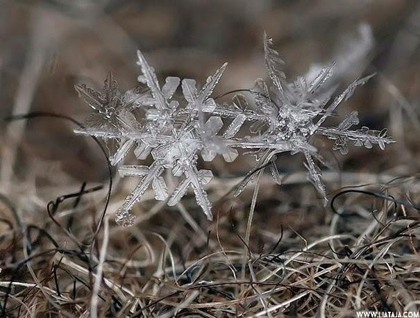 Foto Kepingan Salju dalam Fotografi Makro | liataja.com