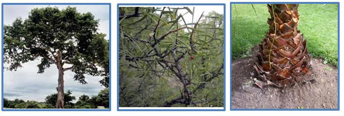 Las plantas para los ni os de 4 de primaria 1 c mo for Como se llaman los arboles que no pierden sus hojas