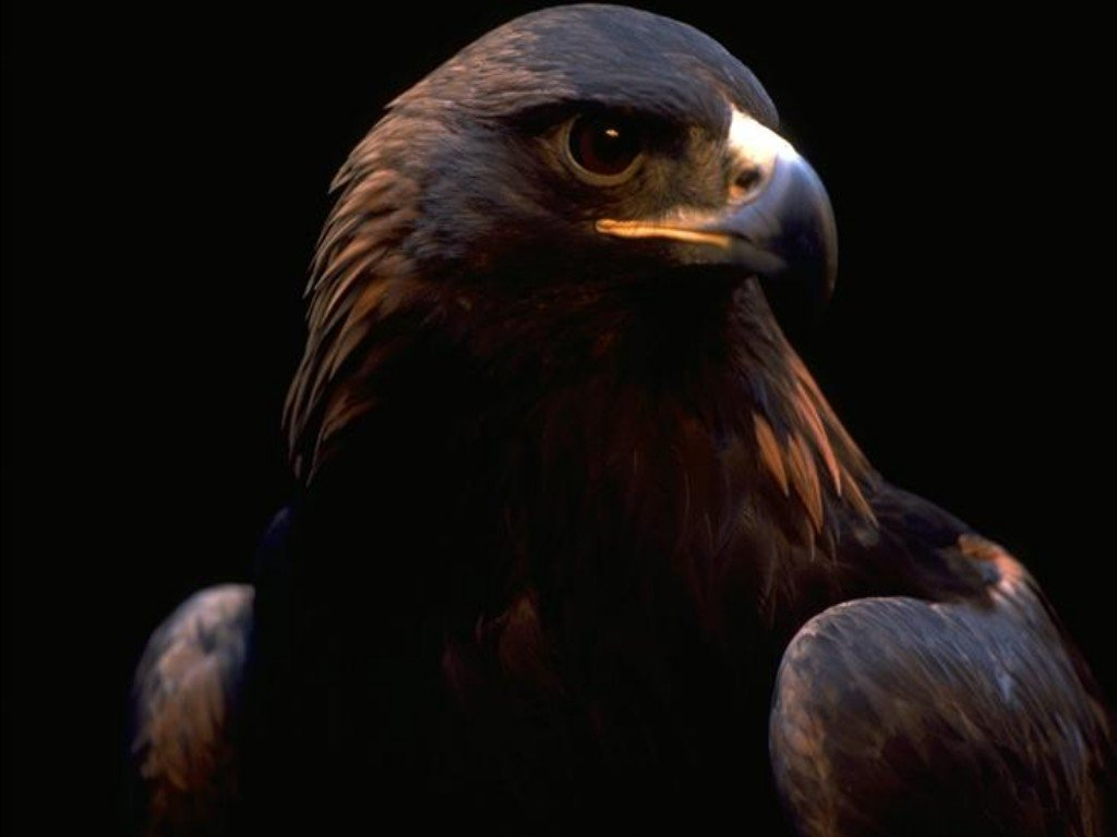 http://3.bp.blogspot.com/-LYg1lu8y1XY/T3BV456hYsI/AAAAAAAAA4I/m_OAiSLSlhU/s1600/06-bird-wallpapers-black-eagle-strength-and-courage-desktop-background.jpg