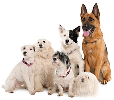 Best Vitamins For Dogs With Allergies