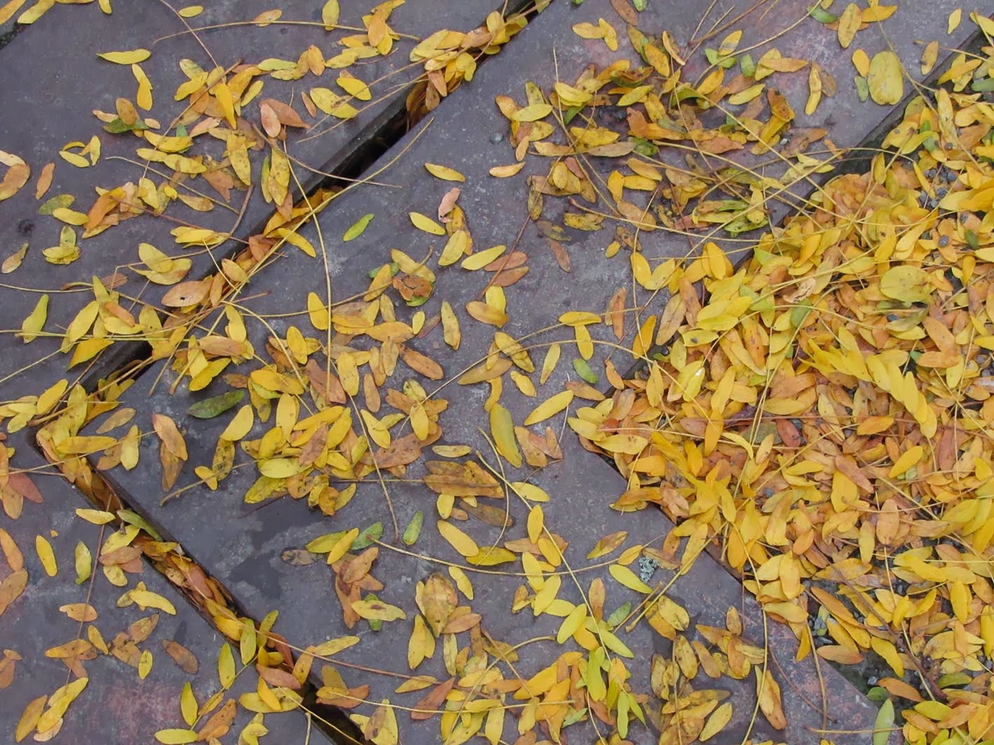 pattern and yellow leaves