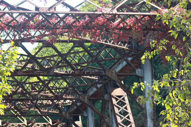 Vines on steel bridge