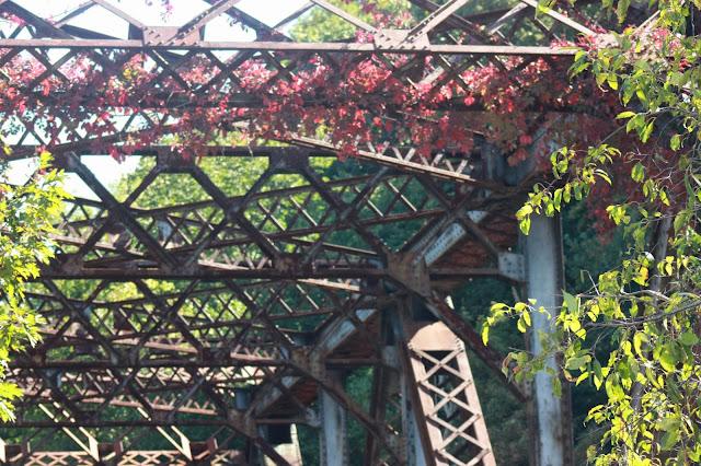 Vines on steel bridge