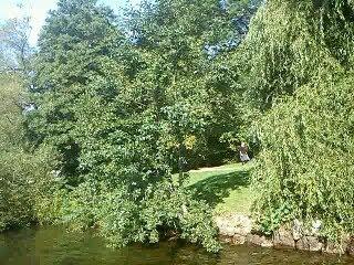 Smedsudden, skönt grönslöjad nära badstrand