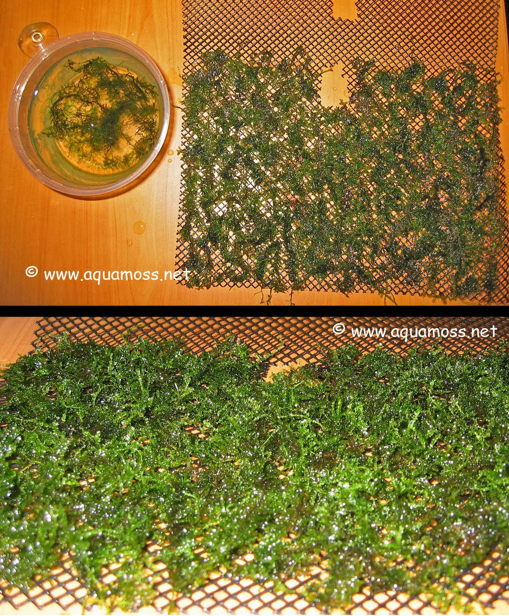 How To Grow Aquatic Moss Wall