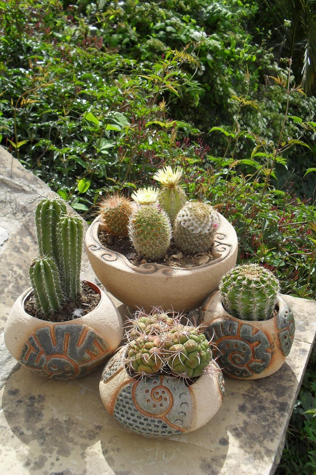 M s de 1000 im genes sobre garden en pinterest plantas y - Cactus en macetas pequenas ...