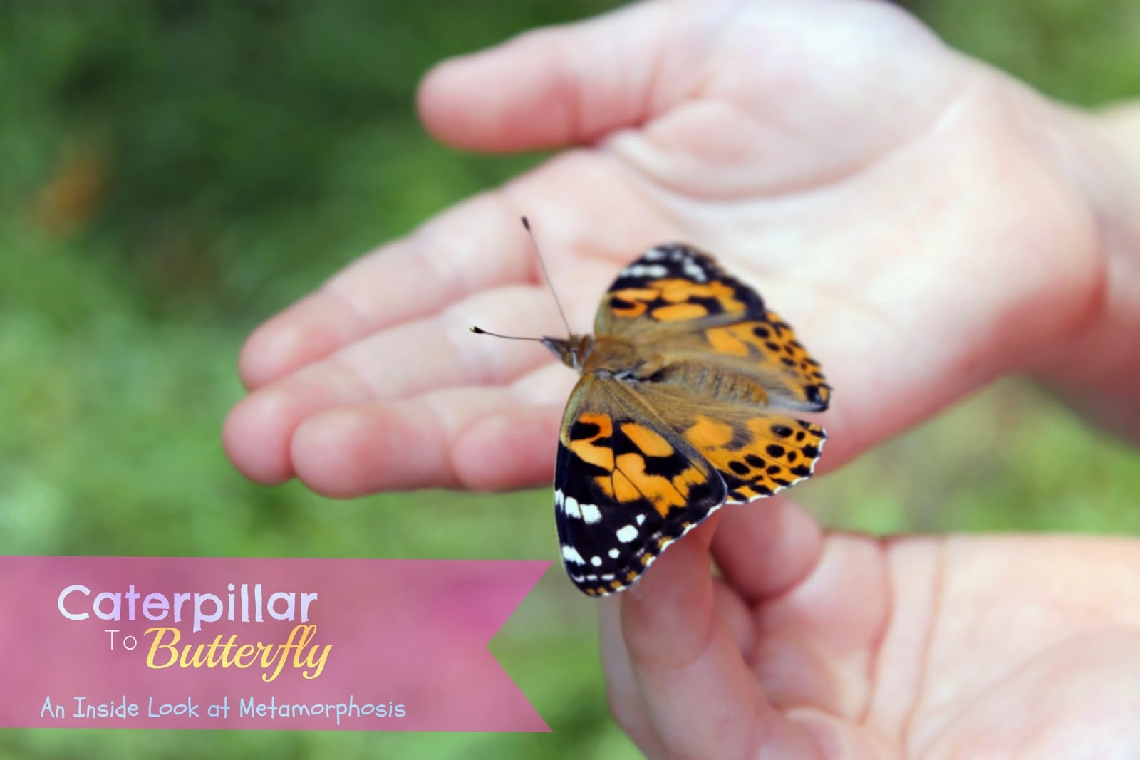 from a caterpillar to a butterfly