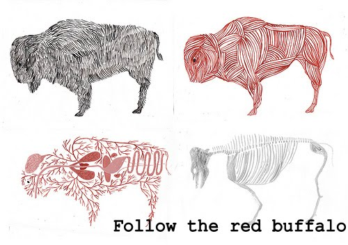 Follow the red buffalo