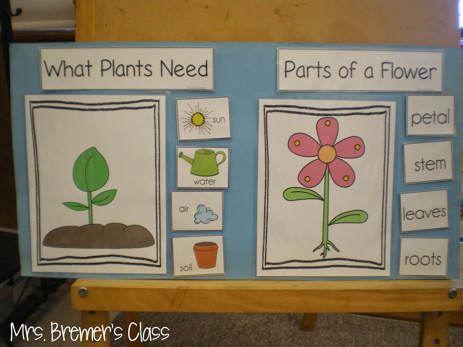 Plant Anchor Chart