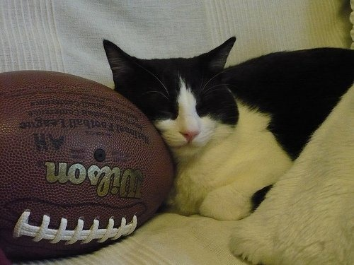 Tingkah Lucu Kucing Ketika Sedang Tidur Sosial Power
