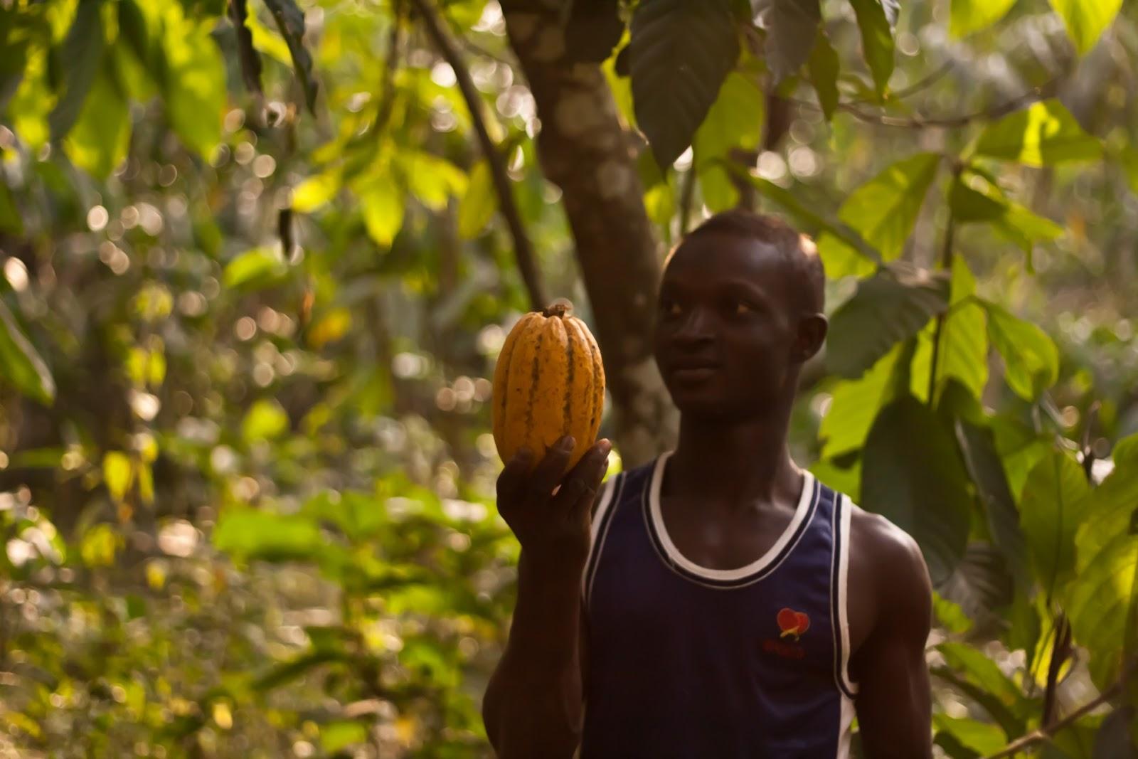 Associazione africasa onlus volontariato in togo for Progetti di piantagione