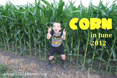 Boy wearing Batman suit next to Corn field