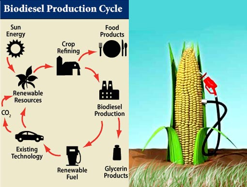 external image biodiesel_production_cycle.jpg