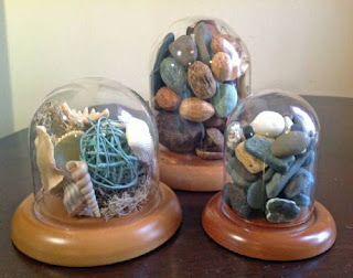 how to display sea shells, glassdomes.com, finehomedisplays, glass domes, glass dome, glass cloches