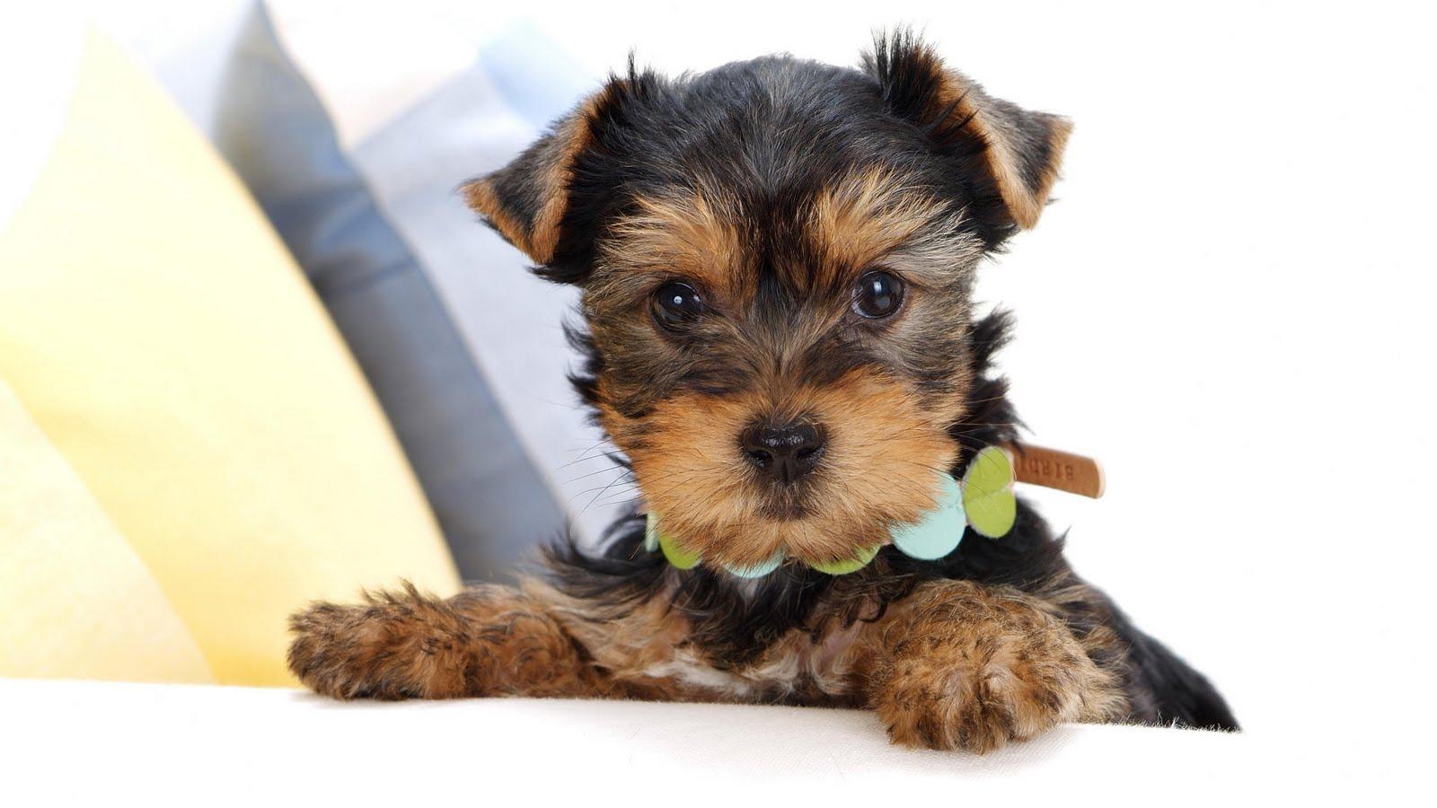 Résultat d'images pour gifs petit chien