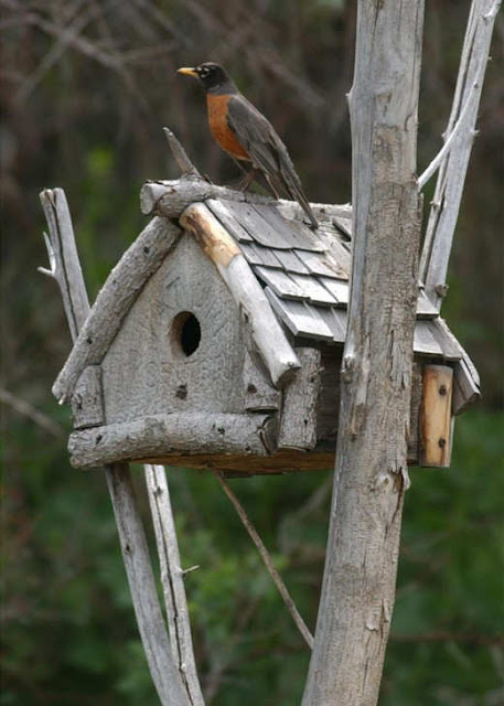 Unique and creative birdhouse designs for Creative birdhouses