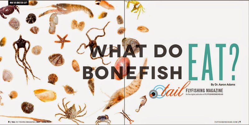 Tail Fly Magazine by Flyfishbonehead is the only fly fishing magazine devoted to fly fishing in saltwater.  We know bonefish on the fly