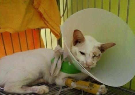 Ibu Kucing Cekal Tetap Menyusu Anak Walau Parah Dilanggar