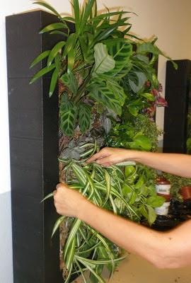 Curso de jardines verticales en madrid nueva edicion for Jardines verticales pdf